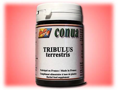 Tribulus terrestris...