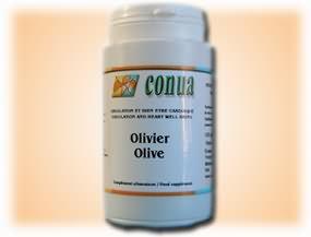 Olivo diabetes colesterol